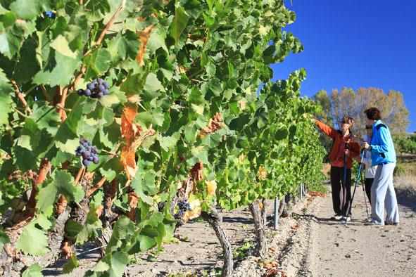 Más de 113.000 personas visitan las Rutas del Vino de Aragón en 2014